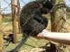 Ben holding a monkey
