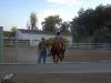 eden-horse