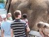 Eden petting the elephant